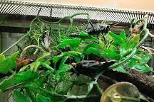 Victoria Bug Zoo, Victoria, Canada