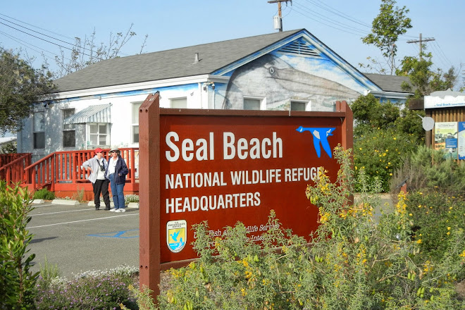 Visit Seal Beach National Wildlife Refuge On Your Trip To