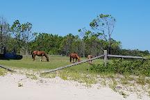 Corolla Wild Horse Fund, Corolla, United States