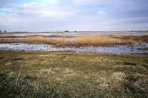 RSPB Frampton Marsh, Boston, United Kingdom