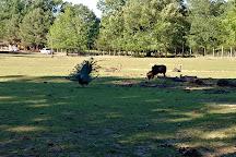Harmony Park Safari, Huntsville, United States