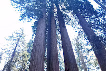 Grant Grove, Sequoia and Kings Canyon National Park, United States