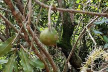 Purdy's All-Natural Macadamia Nut Farm, Molokai, United States
