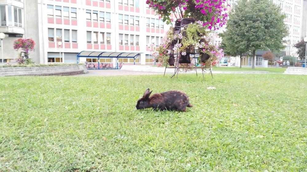 Ospedale Civile San Bortolo - ULSS 8 Berica