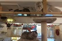 Mr. & Mrs. Cat Cafe, Hong Kong, China