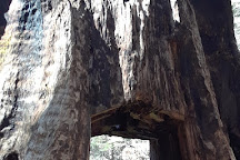 Tuolumne Grove of Giant Sequoias, Yosemite National Park, United States