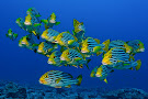 Adventure Scuba Diving Bali