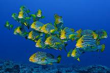 Adventure Scuba Diving Bali, Seminyak, Indonesia