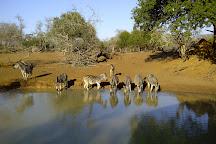 Greater St Lucia Wetland Park, KwaZulu-Natal, South Africa