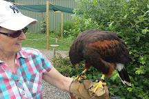 Fens Falconry, Wisbech, United Kingdom