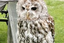 Screech Owl Sanctuary, St Columb Major, United Kingdom
