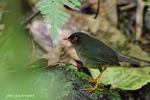 Monteverde Wild Hikes, Monteverde, Costa Rica