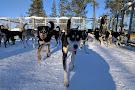 Jytky Hysky Sled Dog Camp