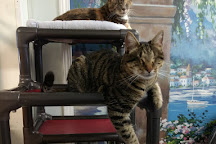 Blind Cat Rescue & Sanctuary, Saint Pauls, United States