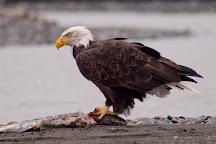 Alaska Chilkat Bald Eagle Preserve, Haines, United States