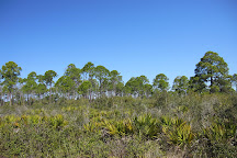 Cedar Key Scrub State Reserve, Cedar Key, United States
