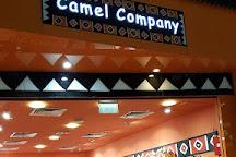 Camel Company, Dubai, United Arab Emirates