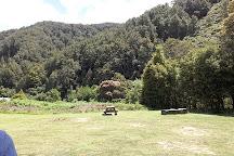 The Old Ghost Road, Westport, New Zealand