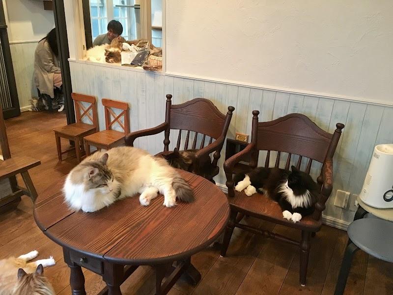 猫カフェ リエン cat cafe RIEN