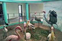 Nalsarovar Bird Sanctuary, Nalsarovar, India