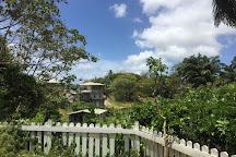 Welchman Hall Gully, Saint Thomas Parish, Barbados