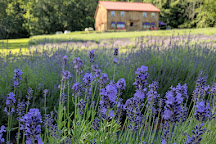 Peace Valley Lavender Farm, Doylestown, United States