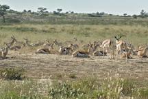 Kgalagadi Transfrontier Park, Upington, South Africa