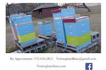 Nottingham Bees, Grand Prairie, United States