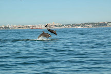 Dolphin Explorers, Cascais, Portugal