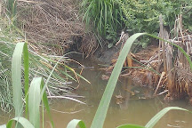 Bear Island Wildlife Management Area, Green Pond, United States