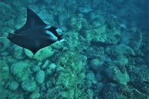 Kona Honu Divers, Kailua-Kona, United States