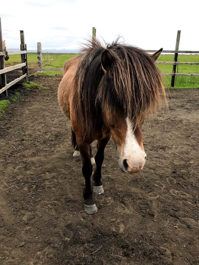 Hella Horse Rental