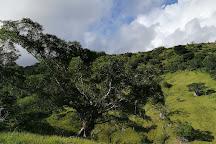 Parc des Grandes Fougeres, Farino, New Caledonia