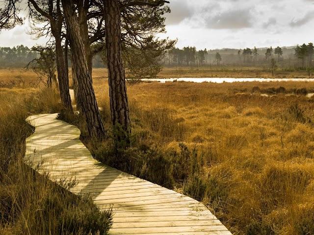Thursley National Nature Reserve