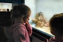 North Sea Aquarium (Noordzeeaquarium), Ostend, Belgium