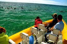 Kangaroo Island Marine Adventures, Kingscote, Australia
