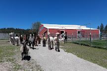 Seven Stars Alpaca Ranch, Coeur d'Alene, United States