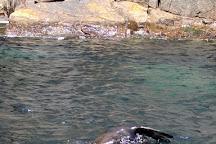 Wild Ocean Tasmania, Eaglehawk Neck, Australia