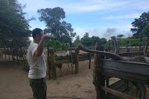 Desaru Ostrich Farm, Johor, Malaysia