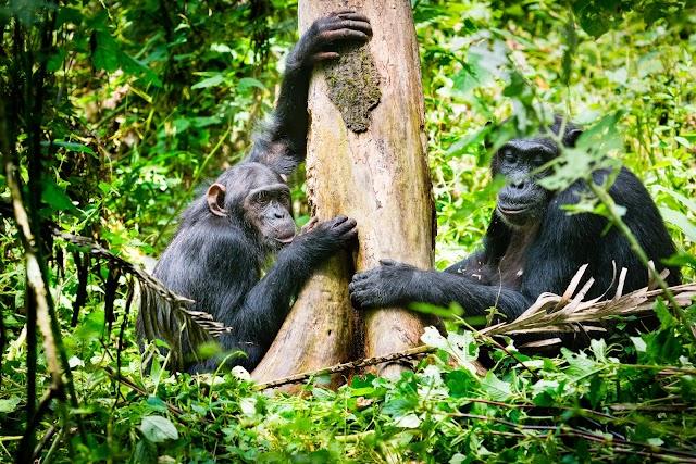 Busira-Kibale Forest
