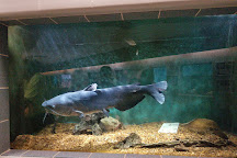 National Fish Hatchery & Aquarium, Natchitoches, United States