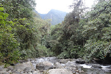 Las Tangaras Reserve (Reserva las Tangaras), Mindo, Ecuador