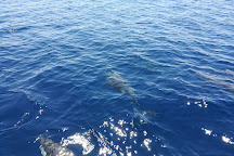Jonian Dolphin Conservation, Taranto, Italy