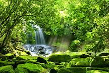 Dominica Botanic Gardens, Roseau, Dominica