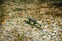 Fish Creek Wildlife Observation Site, Hyder, United States