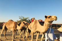 The Camel Farm, Dubai, United Arab Emirates