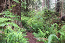 Arcata Community Forest