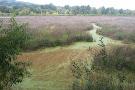 Oaks Bottom Wildlife Refuge