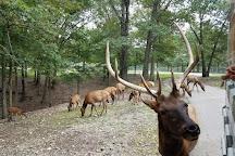 Wild Animal Safari, Strafford, United States