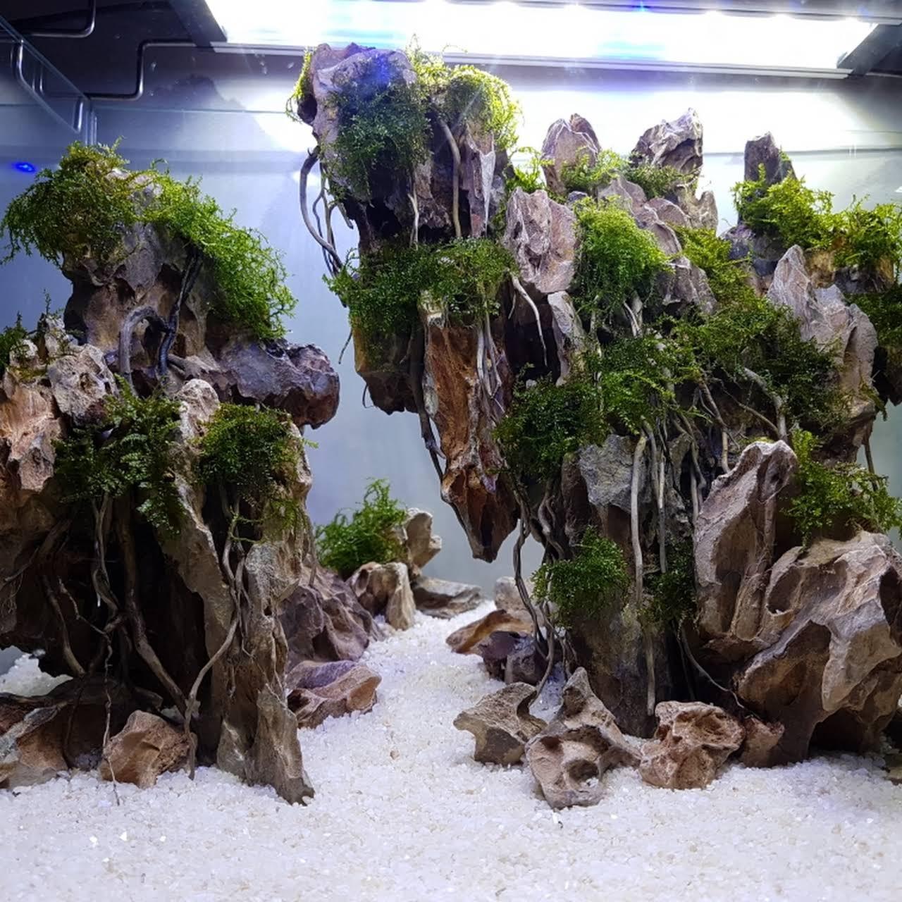 Aquatrend Ikan Hias Aquascape Malang Kedai Aquarium